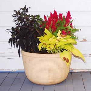 Где покупать комнатные растения и кашпо
