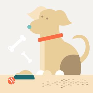 Как приспособить квартиру для собаки — Квартирный вопрос на The Village