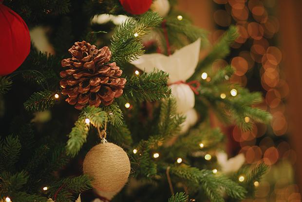 До Нового года 7 дней: Где купить елку в Сочи — Гид The Village на The Village