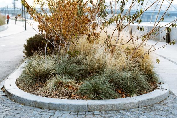 Почему с Крымской набережной пропадают растения — Общественные пространства на The Village
