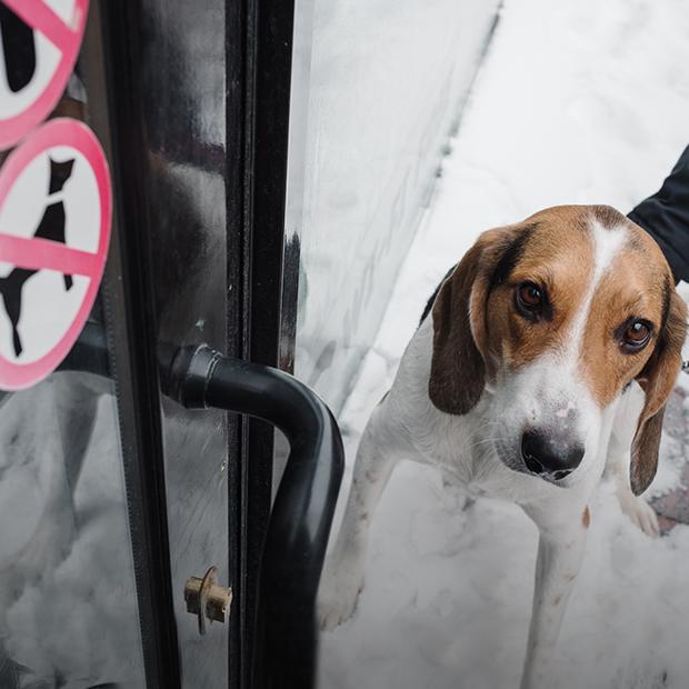 В какие кафе можно прийти с собакой в Нижнем Новгороде — Эксперимент на The Village