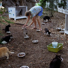 В Петербурге пройдёт акция помощи животным