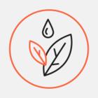 Терренкур в Сочи благоустроят к 15 мая