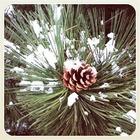 Первый снег в снимках Instagram