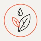 Рядом с Таврическим садом открывается магазин с экотоварами