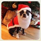 Рождество в разных странах в снимках Instagram