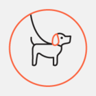 В Москве запустился сервис по выгулу собак