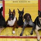 Московских собак отправят на курсы социализации