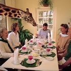 Позавтракать с жирафом