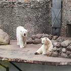 Как живёт и меняется Ленинградский зоопарк