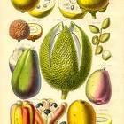 Exotic Fruits!