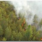 Защищать московские леса от пожаров будут беспилотники
