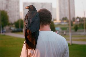 Люди, живущие с воронами
