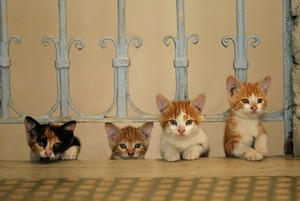 «Сурганова и оркестр», «Голубой Байкал» и кино про кошек