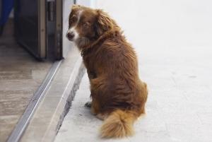 Dog friendly: Рестораны, куда пускают с животными