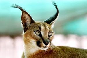 Кража кота за полмиллиона и ещё 7 громких происшествий с животными