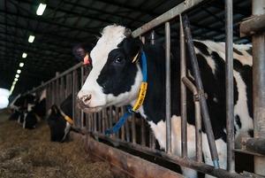 Как делают молочные продукты
