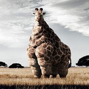 Удержать вес: Почему полнеющие сотрудники — тревожный сигнал для компании