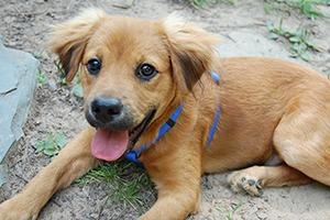 Иностранный опыт: Что делать с бездомными собаками