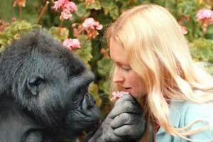 События недели: Icons, PetroJazz, говорящая горилла и цветение азалий в Ботаническом