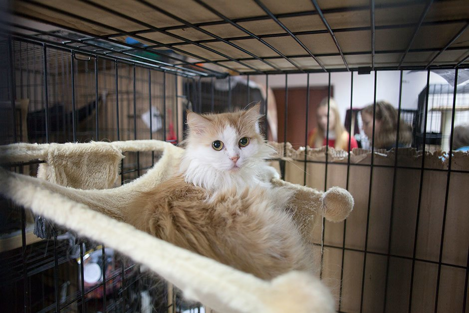Коты иты: Как помочь брошенным животным. Изображение № 10.