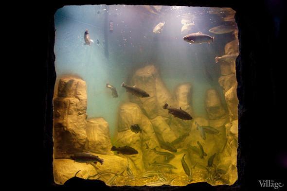 Первый океанариум открылся в Москве. Изображение № 11.