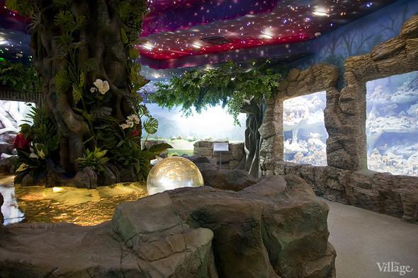 Первый океанариум открылся в Москве. Изображение № 3.