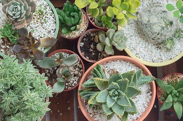 Как подобрать цветы и комнатные растения для дома. Изображение № 5.