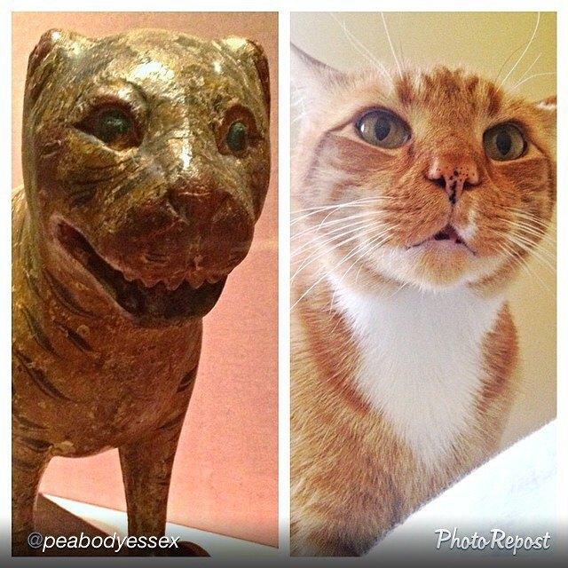 Музейные коты вснимках Instagram. Изображение № 14.