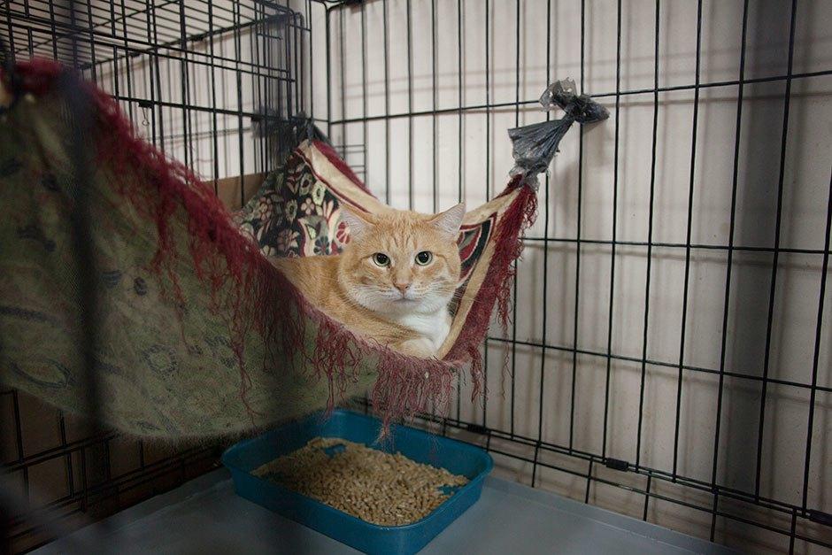 Коты иты: Как помочь брошенным животным. Изображение № 7.