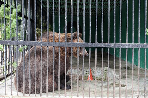 Как живёт и меняется Ленинградский зоопарк . Изображение № 26.