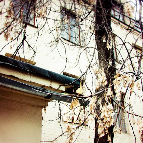 В зоне риска: Дом Поленова на Зоологической улице. Изображение № 6.