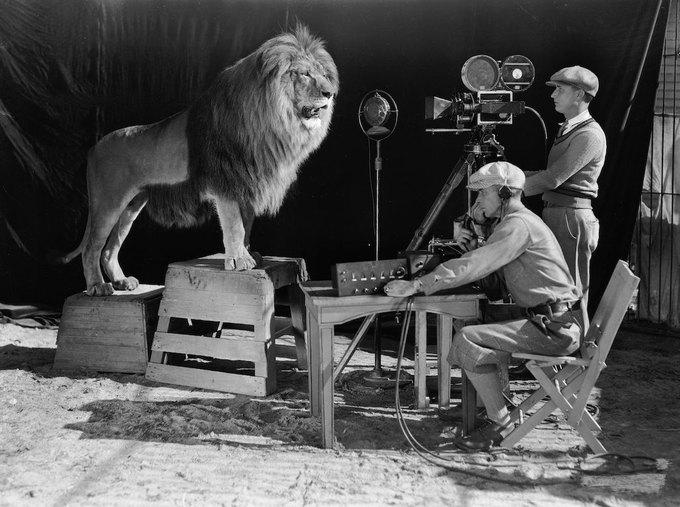 История о домашнем насилии, интервью с Касперским и судьба льва из заставки MGM. Изображение № 1.
