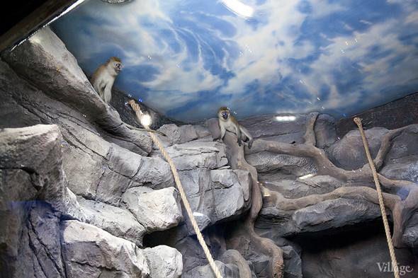 Первый океанариум открылся в Москве. Изображение № 23.