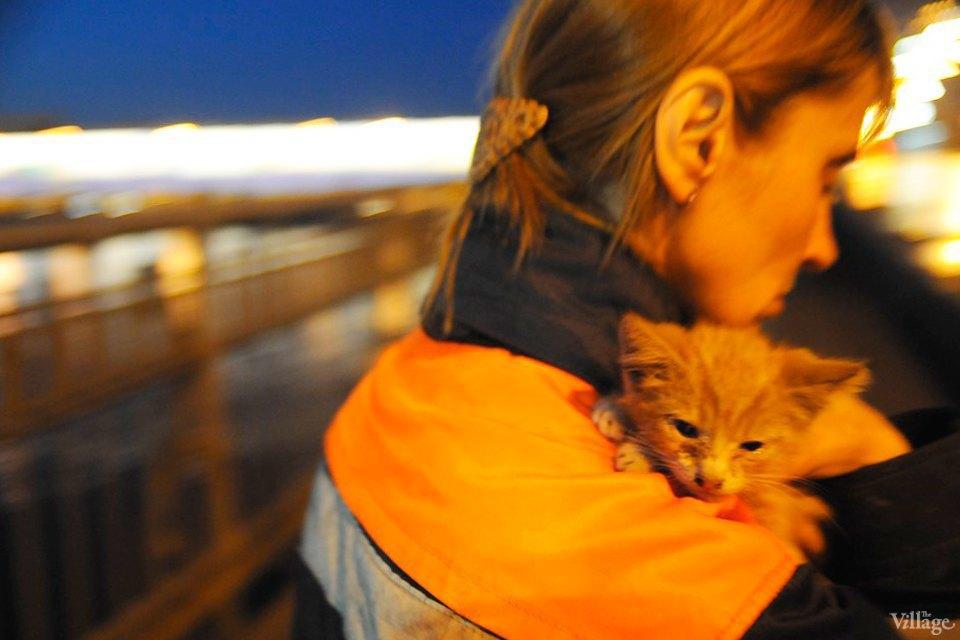 Кота за хвост: Как МЧС спасает кошек. Изображение № 8.