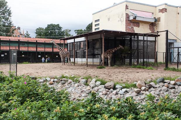 Как живёт и меняется Ленинградский зоопарк . Изображение № 17.