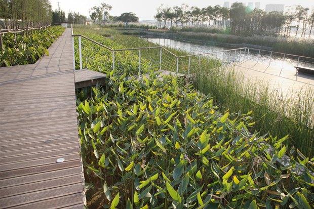 Идеи для города: Парк на месте свалки вТяньцзине. Изображение № 10.