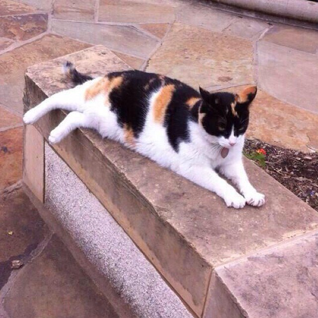 Музейные коты вснимках Instagram. Изображение № 18.