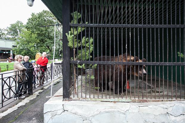 Как живёт и меняется Ленинградский зоопарк . Изображение № 27.