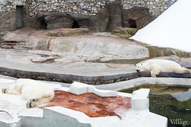 Директор московского зоопарка: «Погода была ужасной, всё выглядело очень грустно». Изображение № 21.