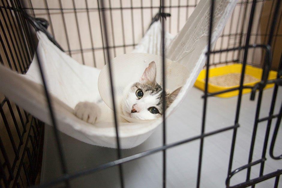 Коты иты: Как помочь брошенным животным. Изображение № 12.