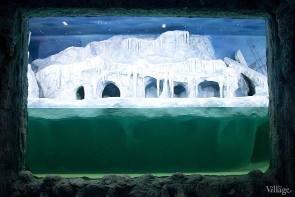 Первый океанариум открылся в Москве. Изображение № 5.