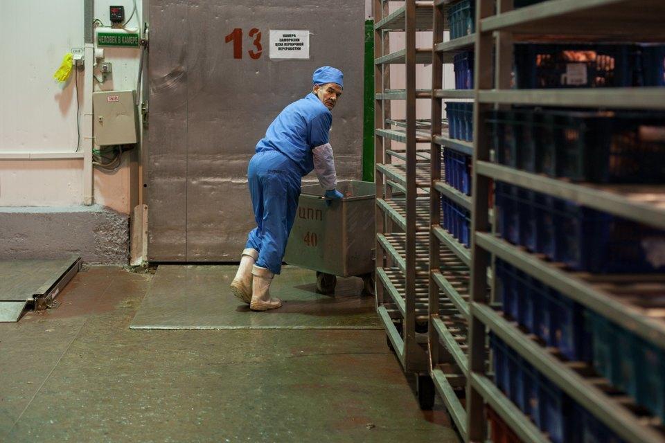 Важная птица: Как ростовский предприниматель приучает россиян есть индейку. Изображение № 30.