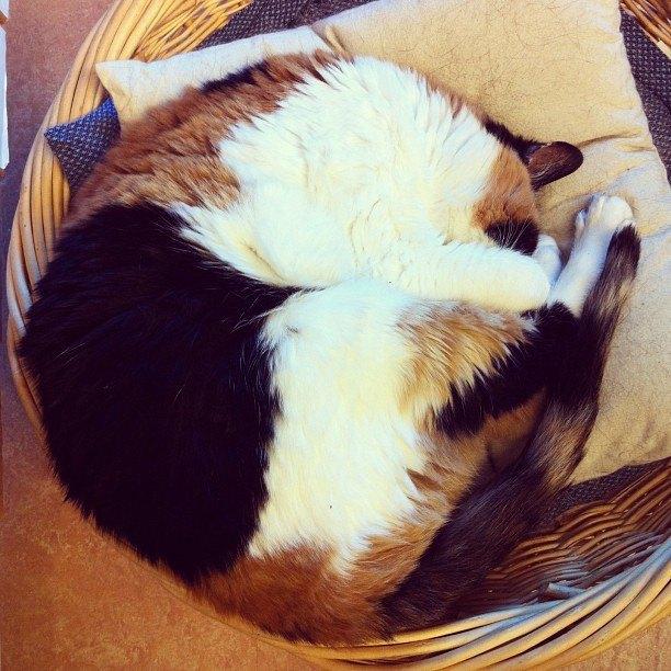 Музейные коты вснимках Instagram. Изображение № 1.
