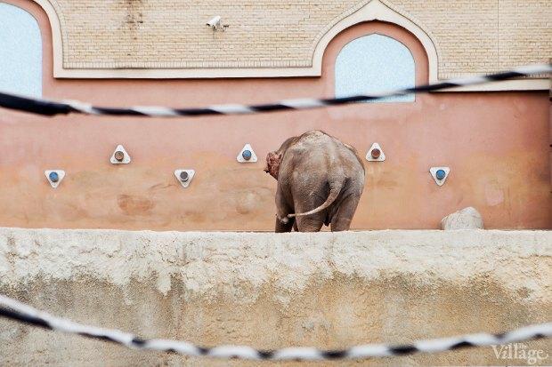 Директор московского зоопарка: «Погода была ужасной, всё выглядело очень грустно». Изображение № 19.