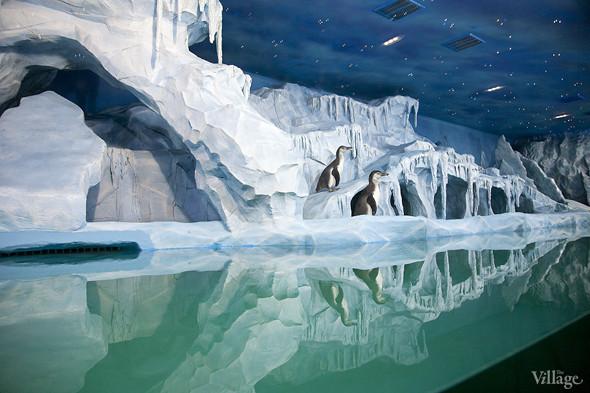 Первый океанариум открылся в Москве. Изображение № 7.