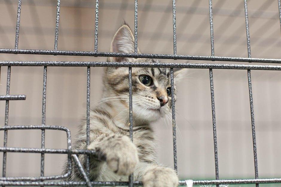 Коты иты: Как помочь брошенным животным. Изображение № 4.