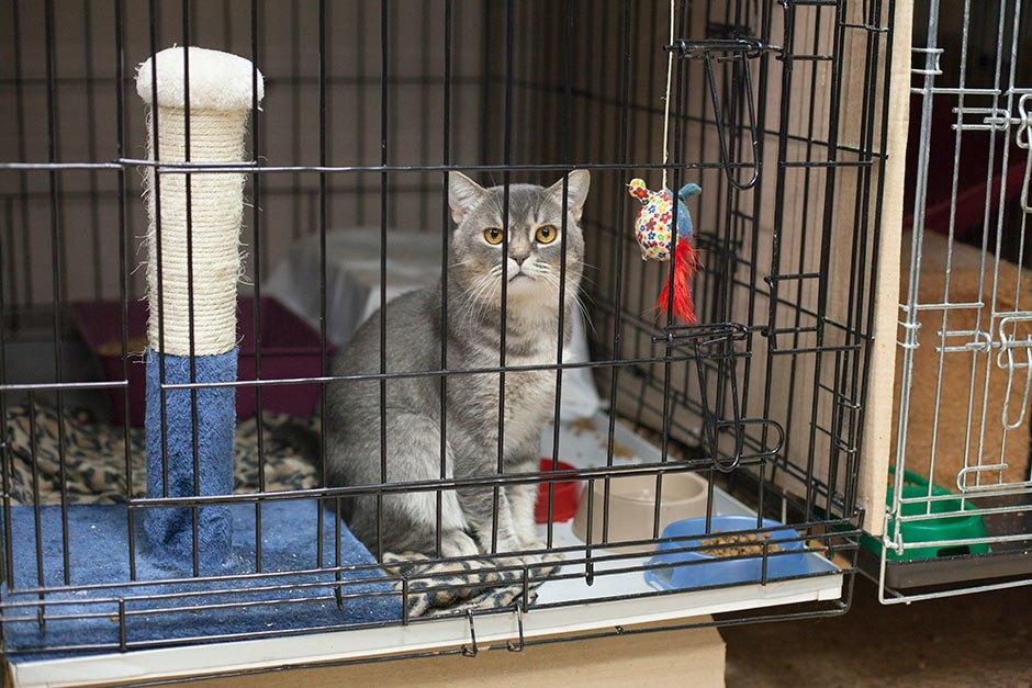 Коты иты: Как помочь брошенным животным. Изображение № 8.