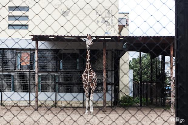 Как живёт и меняется Ленинградский зоопарк . Изображение № 40.