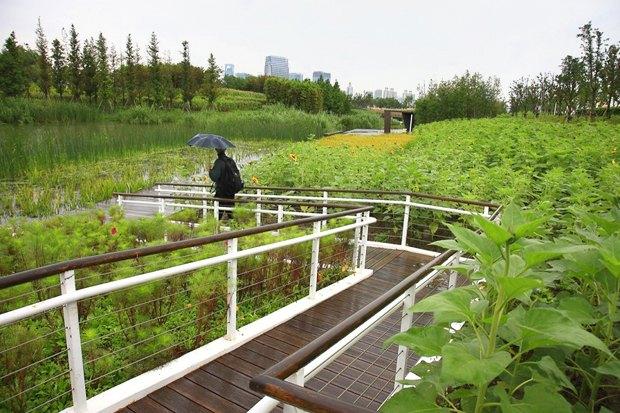 Идеи для города: Парк на месте свалки вТяньцзине. Изображение № 11.